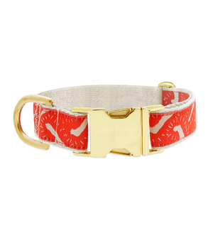 "SEE SCOUT SLEEP Collar 1"" - Life of the Party Vermillion Cream"